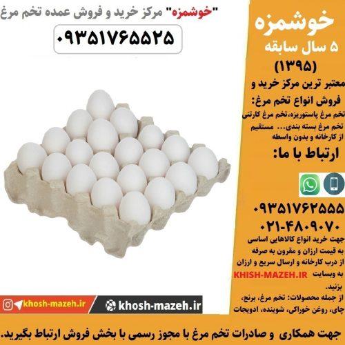 صادرات تخم مرغ با مجوز رسمی