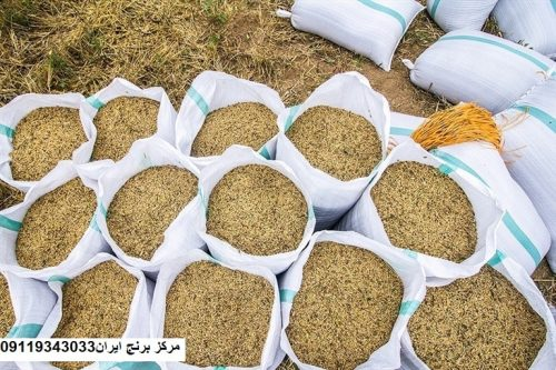 قیمت برنج فجر شمال