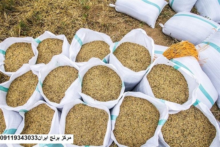 قیمت برنج امروز
